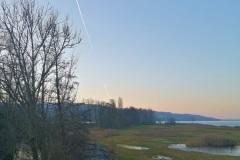 Silberweide, Greifensee