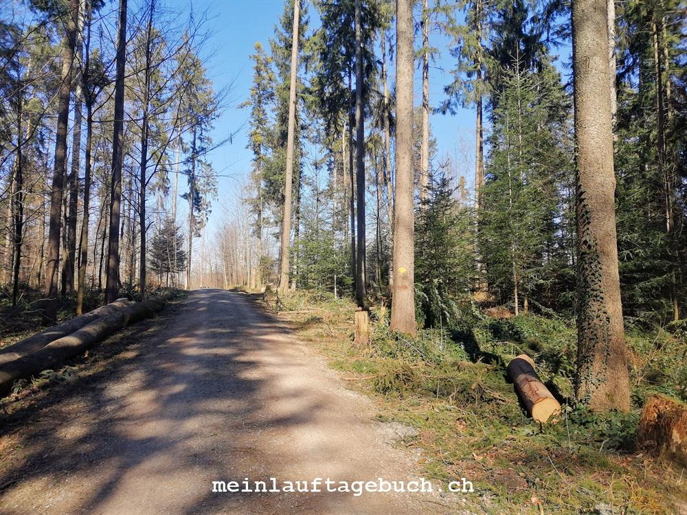 Pfaffhausen, Wald