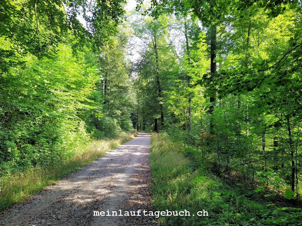 pfaffhausen-wald-okt-2020-1