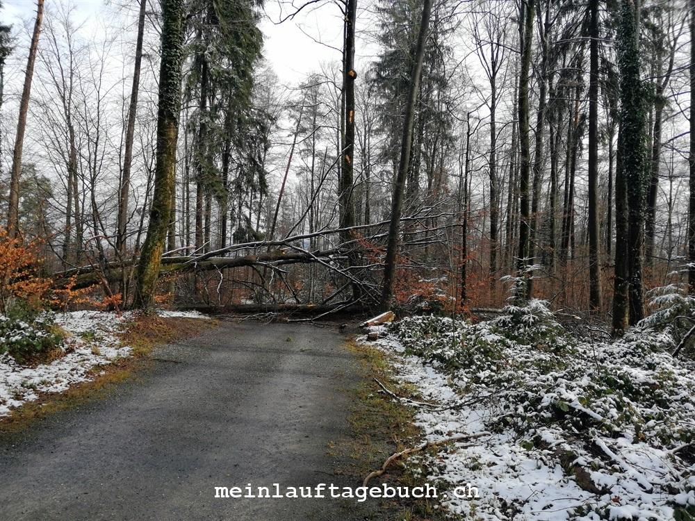 Stäfa, Wald