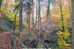 Dübendorf Geeren, Wald
