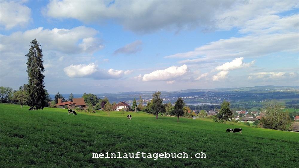 Laufen Training Stäfa Pfaffhausen Greifensee