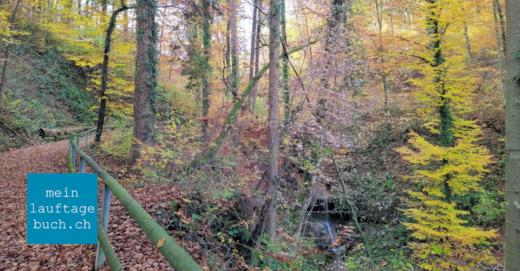 Laufen Training Pfaffhausen Wald Herbst