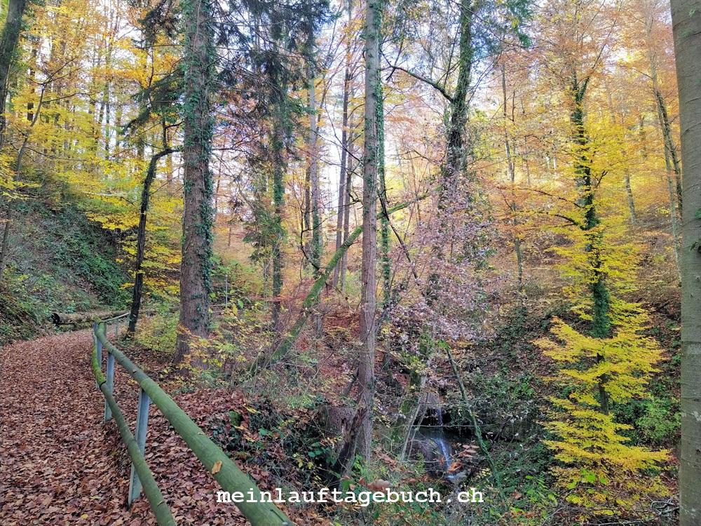 Laufen Training Pfaffhausen Wald Herbst Regen