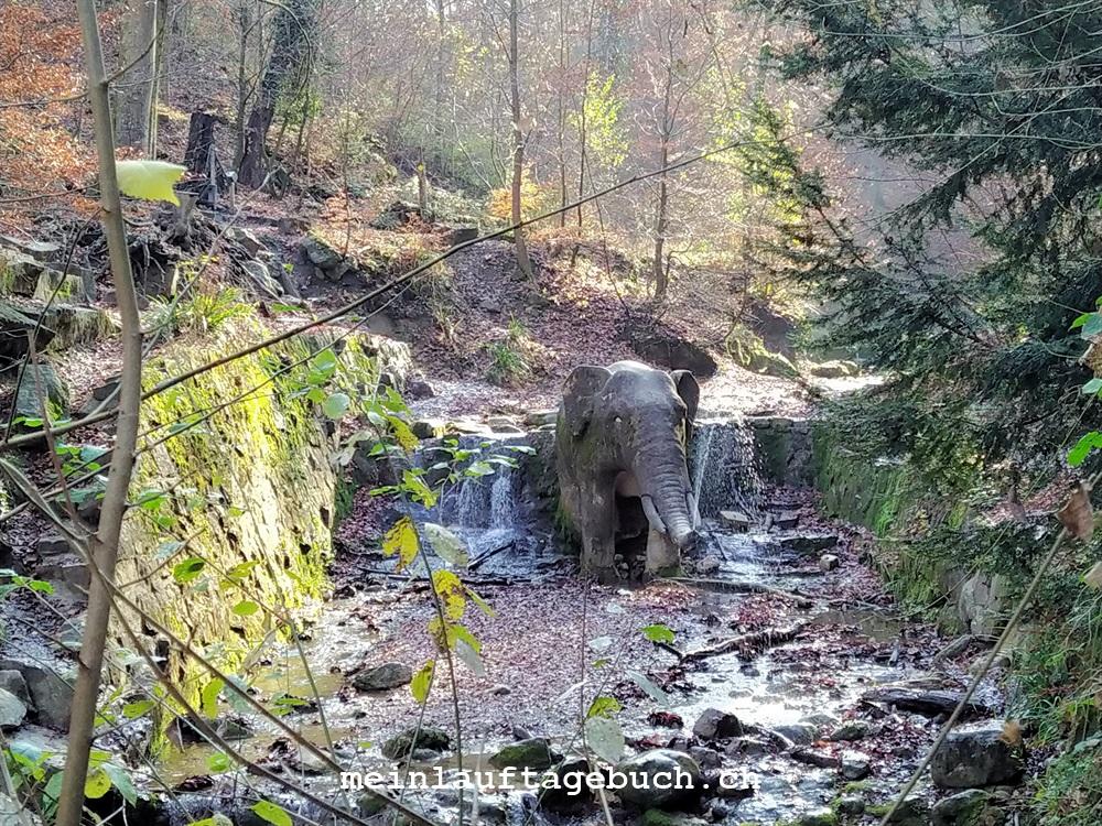 Laufen Training Pfaffhausen Wald Herbst Zürich Elefantenbach